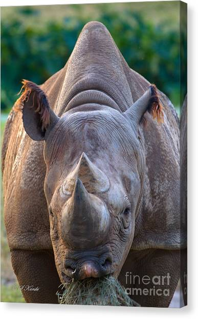 Staring Down Rhino Canvas Print