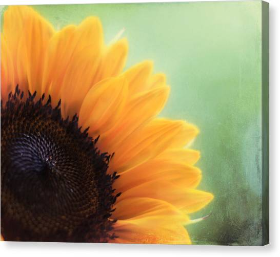 Sunflower Canvas Print - Staring Into The Sun by Amy Tyler