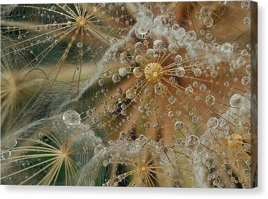 Drops Canvas Print - Starless by El Fil?sofo