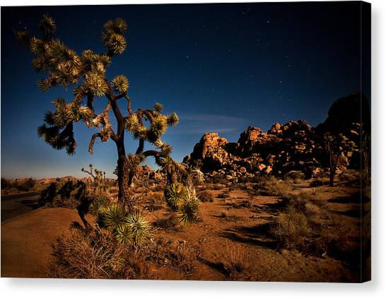 Starlight And Moonlight At Joshua Canvas Print by Peter Tellone