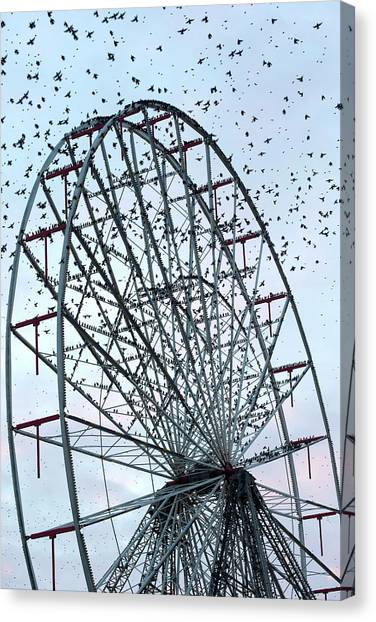 Starlings Canvas Print - Starling Flock On Blackpool Ferris Wheel by Simon Booth
