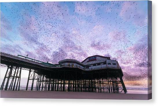 Starlings Canvas Print - Starling Flock Over Blackpool North Pier by Simon Booth