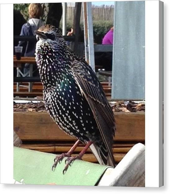 Starlings Canvas Print - #starling Throw Back #sept #berlin by Baz Twyman