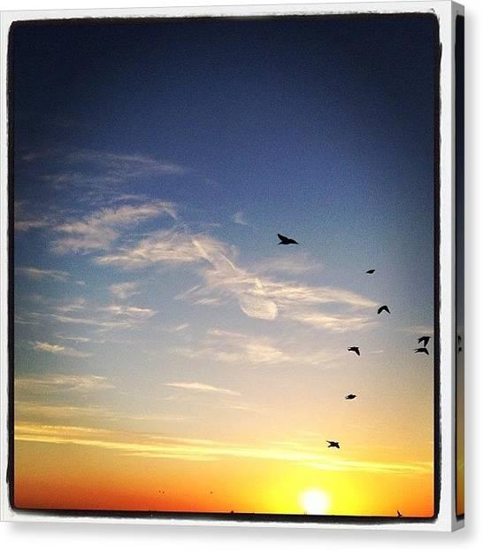 Starlings Canvas Print - #starlings #flock #sunrise by Steven Gaythorpe