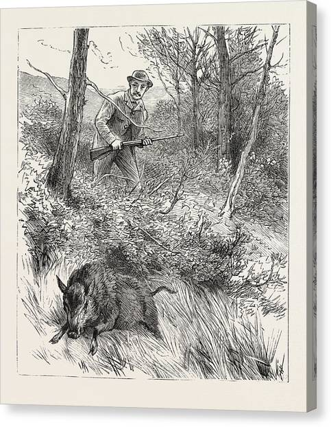 Woodcocks Canvas Print - Starts A Pig While Looking For Woodcock by English School