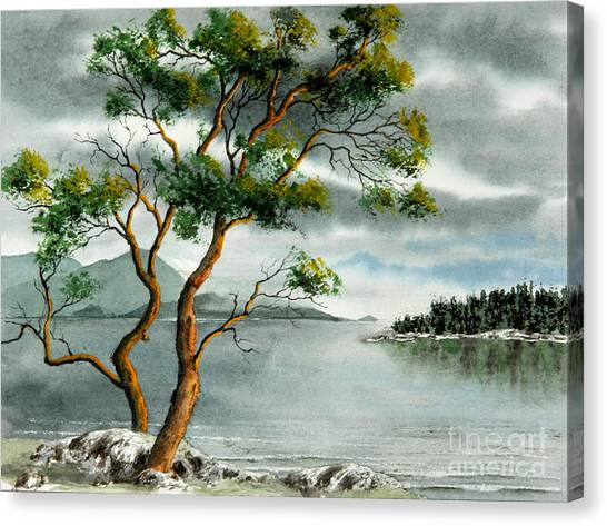 Stately Arbutus Canvas Print by Frank Townsley