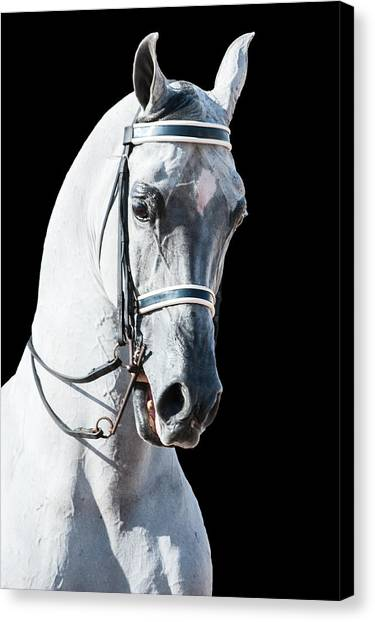 Stature Canvas Print