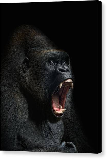Monkeys Canvas Print - Stay Away by Joachim G Pinkawa
