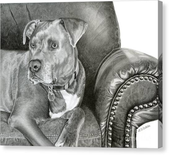 Pit Bull Canvas Print - Leather And Steel by Sarah Batalka