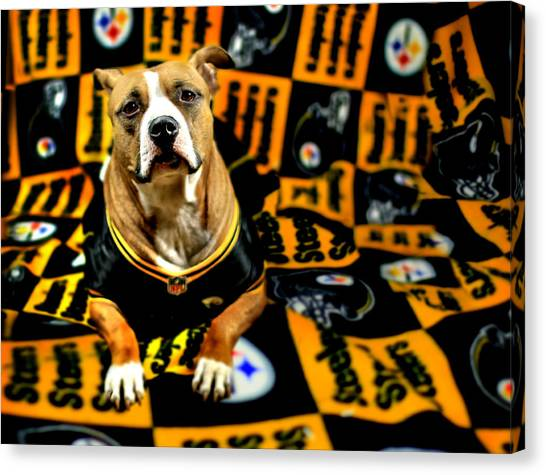 Pitbull Rescue Dog Football Fanatic Canvas Print