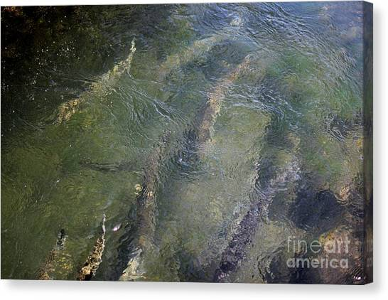 Steelhead Abstract 1 Canvas Print
