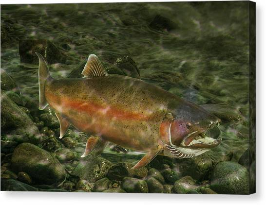Steelhead Trout Spawning Canvas Print
