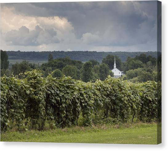 Steeple In The Vines Canvas Print