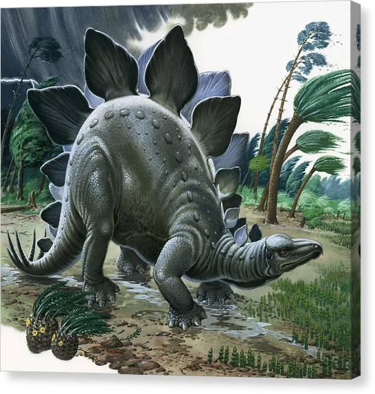 Jurassic Park Canvas Print - Stegosaurus by English School