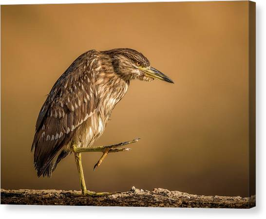Heron Canvas Print - Step By Step by Faisal Alnomas