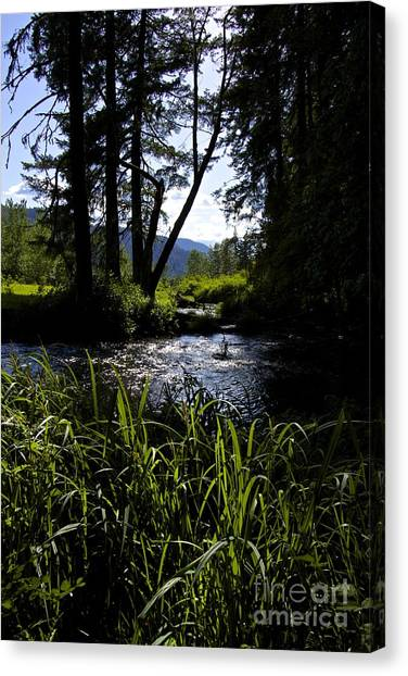 Sterline Blue  Canvas Print by Tim Rice