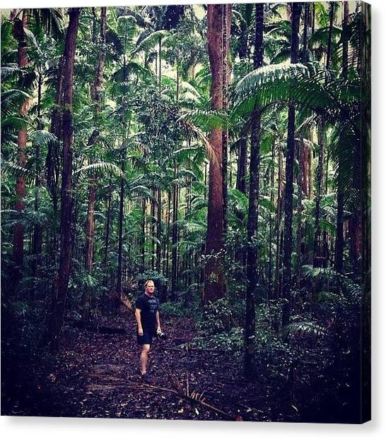 Rainforests Canvas Print - Steve Rutherford In The Yidney Scrub by Tony Keim