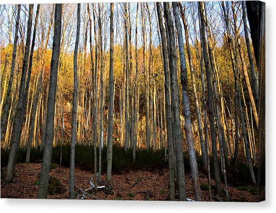 Sticks Canvas Print by Mike Feraco