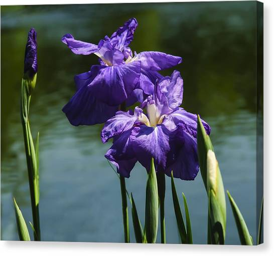 Still Beautiful Canvas Print