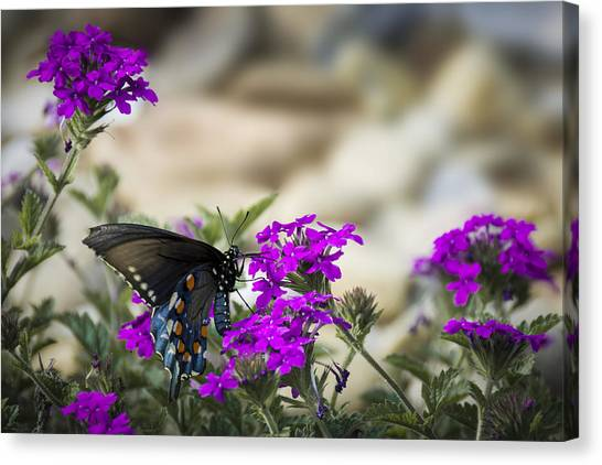 Still Beautiful Swallowtail Canvas Print
