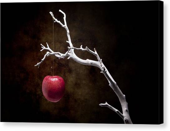 Apples Canvas Print - Still Life Apple Tree by Tom Mc Nemar