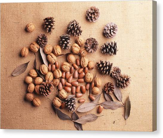 Still Life Of Pine Cones, Walnuts And Acorns Canvas Print by GYRO PHOTOGRAPHY/amanaimagesRF