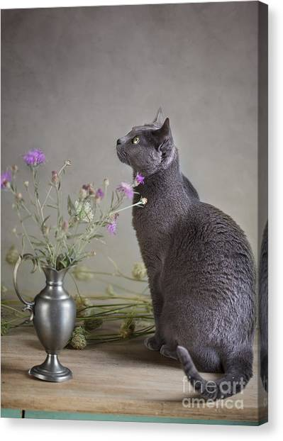 Russian Blue Canvas Print - Still Life With Cat by Nailia Schwarz