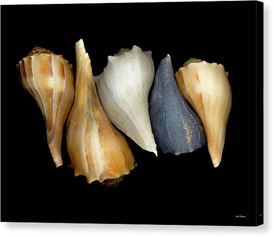 Still Life With Five Whelk Shells Canvas Print