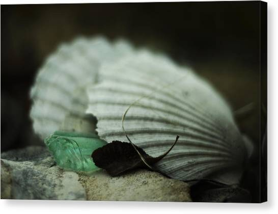 Still Life With Fossil Shells And Beach Glass Canvas Print