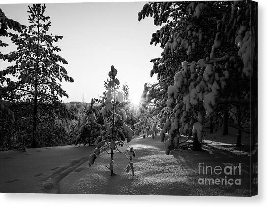 Still Standing In The Winter Sunset Bw Canvas Print