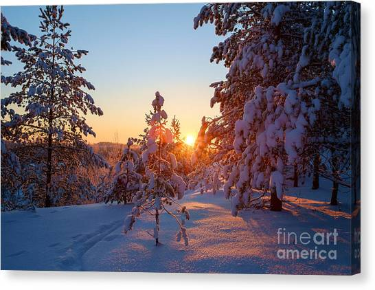 Still Standing In The Winter Sunset Canvas Print