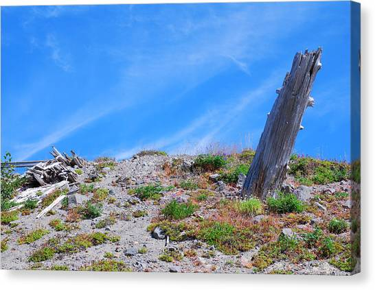 Portland Timbers Canvas Print - Still Standing. Near Mount St. Helens 2012 by Connie Fox