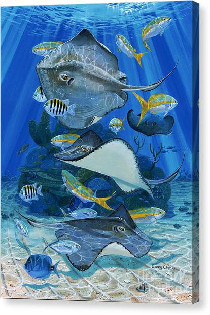 Tiger Sharks Canvas Print - Stingray City Re0011 by Carey Chen