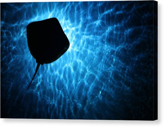 Stingray Silhouette Canvas Print