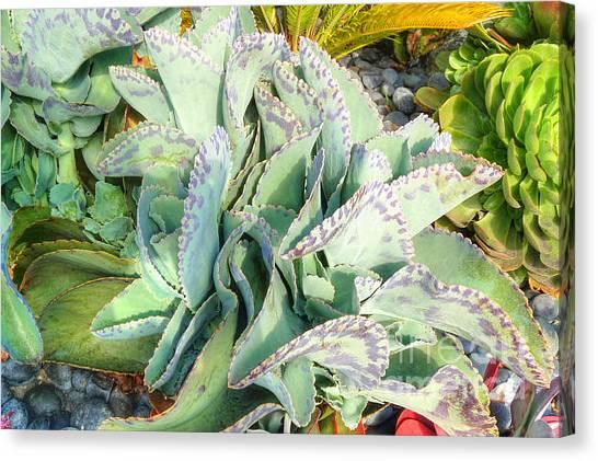 Stippled Cactus Canvas Print by Deborah Smolinske