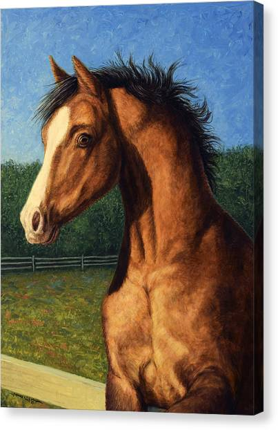 Stallions Canvas Print - Stir Crazy by James W Johnson