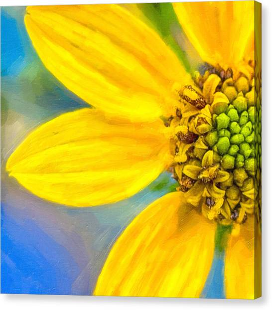Stone Mountain Yellow Daisy Details - North Georgia Flowers Canvas Print by Mark E Tisdale