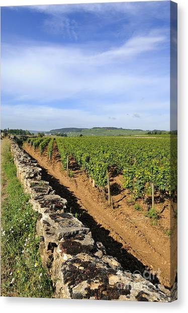 Stonewall Canvas Print - Stone Wall. Vineyard. Cote De Beaune. Burgundy. France. Europe by Bernard Jaubert