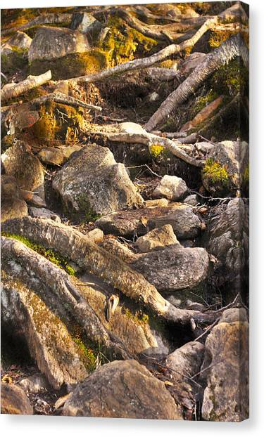 Stones And Roots Canvas Print by Alex Wrenn