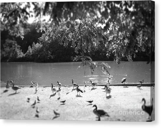 Stony Brook Pond Canvas Print