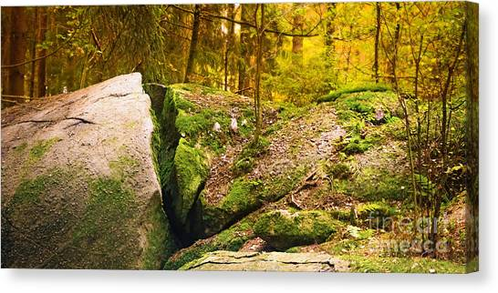 Mossy Forest Canvas Print - Stony Woods Panoramic by Lutz Baar