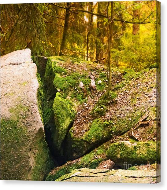 Mossy Forest Canvas Print - Stony Woods Square by Lutz Baar