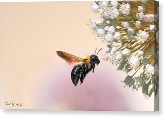 Stop And Smell The Flowers Canvas Print by Dave Hrusecky