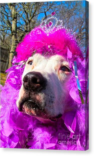Stop Bsl Officer Do You Hate Me Because I'm A Pit Bull Or Cause I'm A Dude Wearing A Pink Tiara? Canvas Print by Q's House of Art ArtandFinePhotography