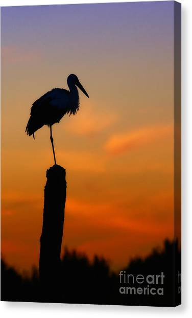 Storck In Silhouette High On A Pole Canvas Print