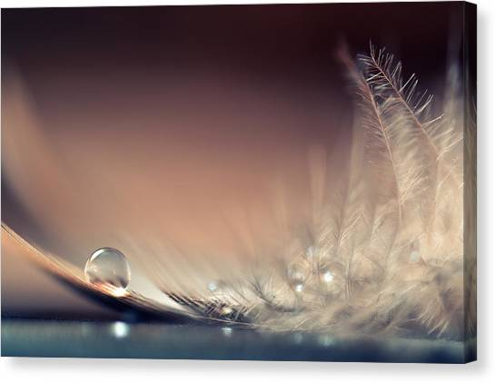 Drops Canvas Print - Stories Of Drops by Dmitry.d