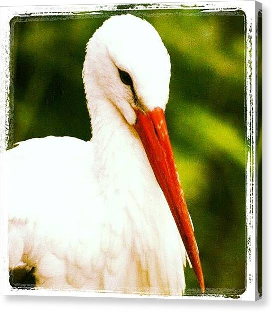 Storks Canvas Print - #stork #feathers #wildlife by Nicola  Young