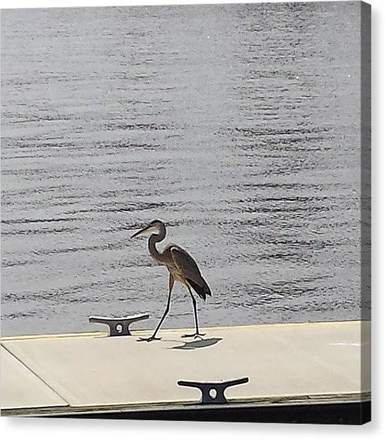 Storks Canvas Print - #stork Waiting On His #boat by Damien Lamar