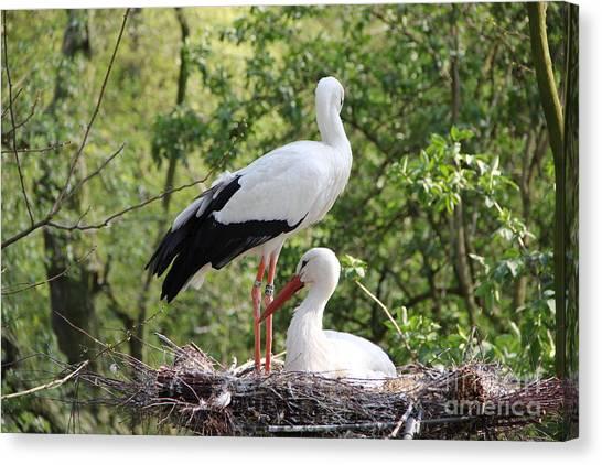 Storks Nesting Canvas Print