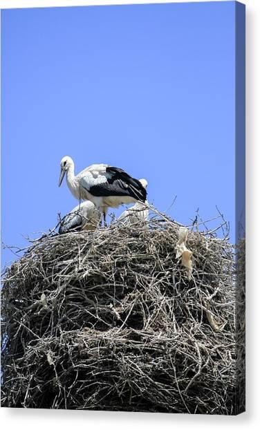 Storks Canvas Print - Storks Nesting by Photostock-israel